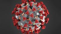 Forstørrelse av koronavirus. Svart bakgrunn. Kule med røde tagger.