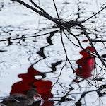 Trær med rødt som speiler seg i vann